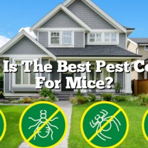 What Is The Best Pest Control For Mice?